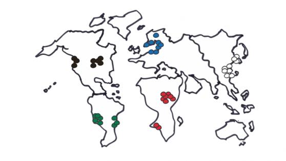Homogenous-Teams-Global-Diversity