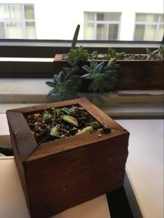new plant growing, Grit and Growth Mindset
